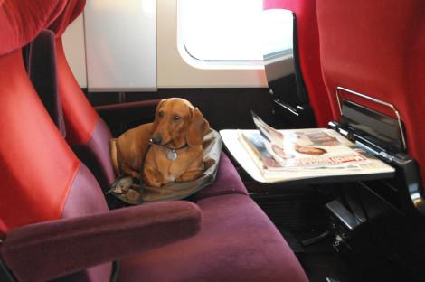 Cão em Thalys