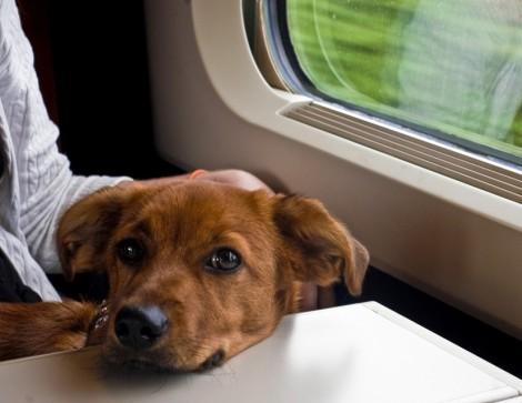 Viajar pela Europa de Trem com Animais de Estimação - Perro en Thalys